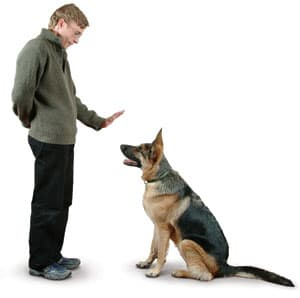 Picture taken from from www.thedogtrainingformula.com