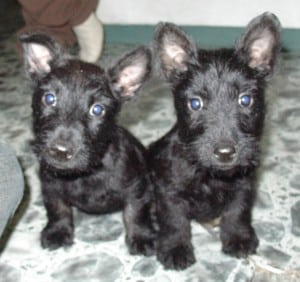 Picture taken from www.everythingdogblog.com