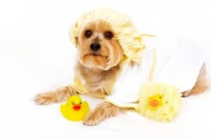 Image taken from www.pampered-dog-gifts.com