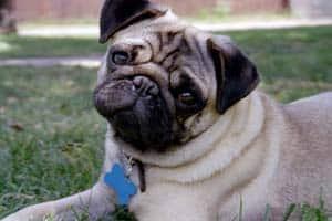 Picture taken from www.puppydogweb.com