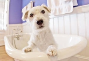 Image taken from www.dog-grooming-business.com