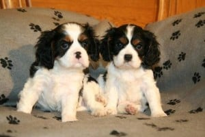 Picture taken from www.pictures-of-dogs.info