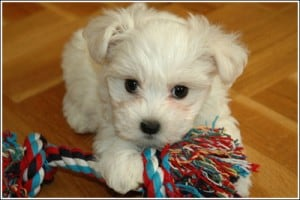 Image taken from www.pawsandkisses.net